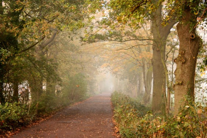 peaceful trail into the mist 18053726